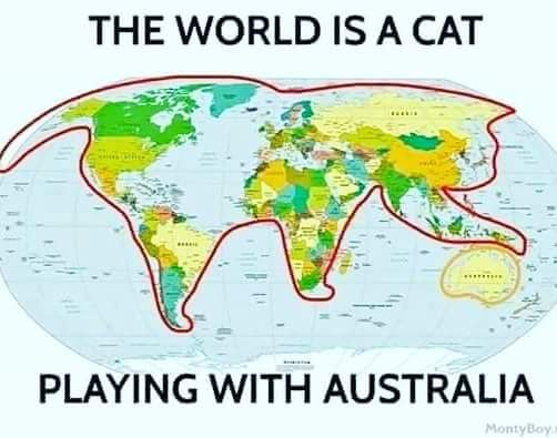 the world is a cat.jpg